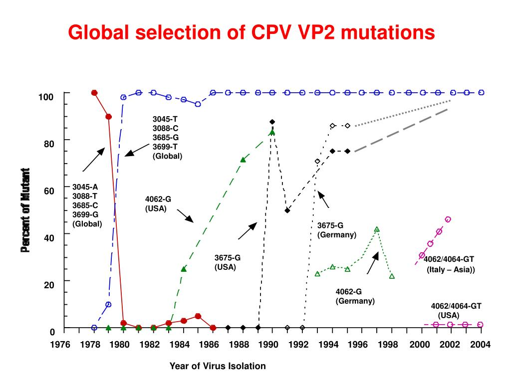 Global selection of CPV VP2 mutations
