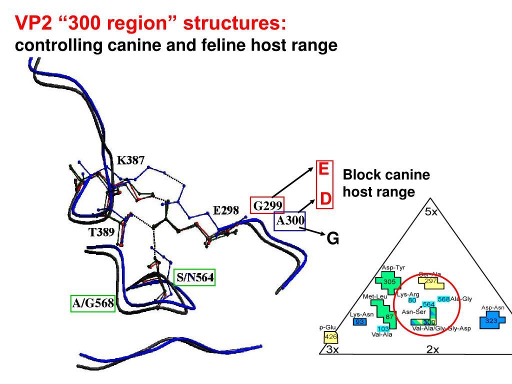 """VP2 """"300 region"""" structures:"""
