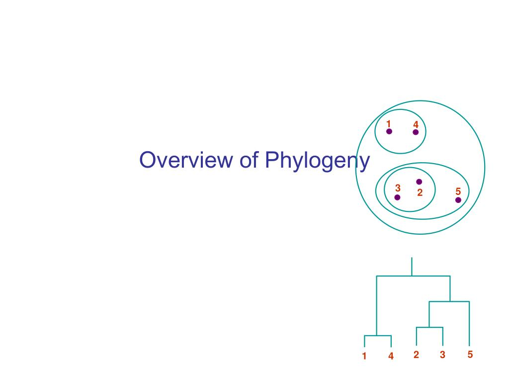 overview of phylogeny l.