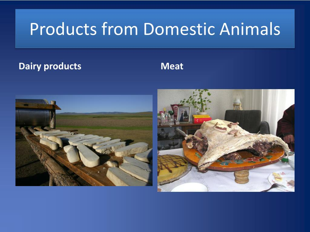 Products from Domestic Animals