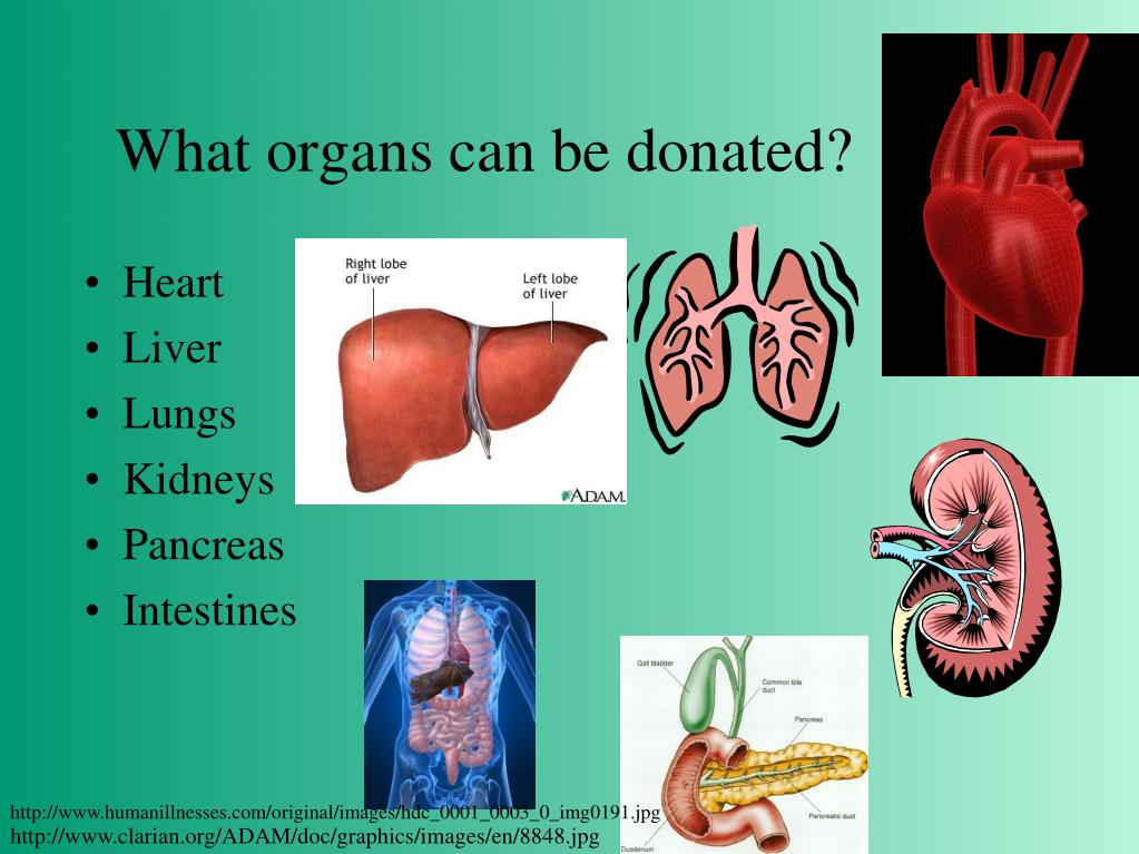 What organs can be donated?