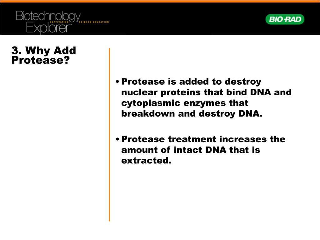 3. Why Add Protease?
