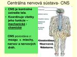 centr lna nervov s stava cns