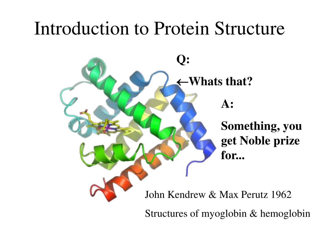 introduction to protein structure l.