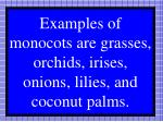 examples of monocots are grasses orchids irises onions lilies and coconut palms