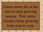 green stems die at the end of each growing season tree stems trunks keep growing from year to year