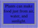 plants can make food just from air water and sunlight
