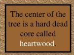 the center of the tree is a hard dead core called heartwood