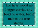 the heartwood no longer carries any food or water but it makes the tree strong