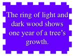 the ring of light and dark wood shows one year of a tree s growth