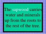 the sapwood carries water and minerals up from the roots to the rest of the tree
