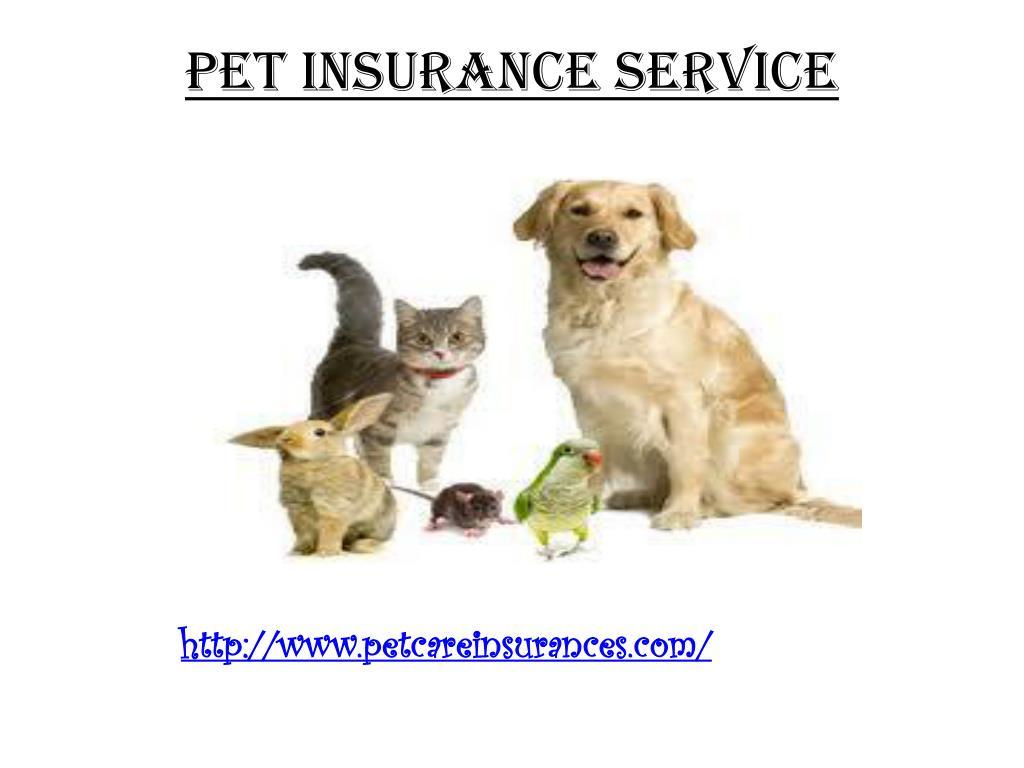 PET INSURANCE SERVICE