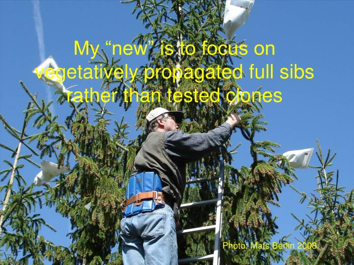 """My """"new"""" is to focus on vegetatively propagated full sibs rather than tested clones"""
