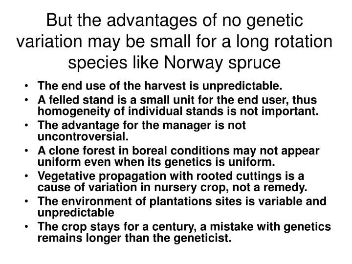 But the advantages of no genetic variation may be small for a long rotation species like Norway spruce