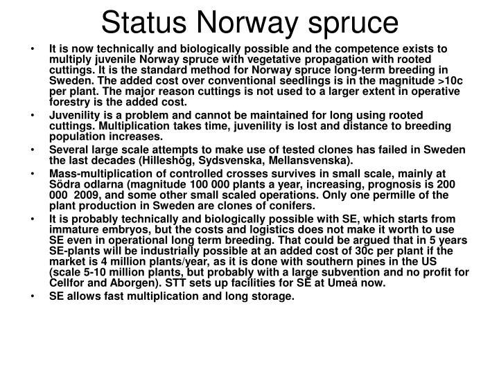 Status norway spruce