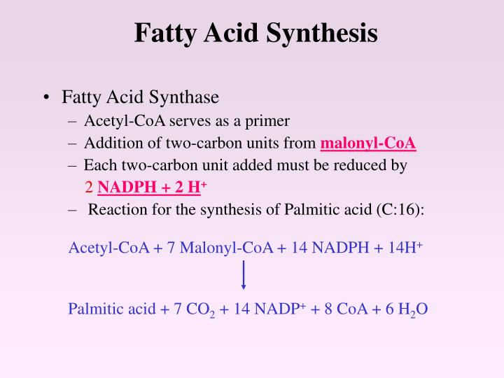 fatty acid synthesis n.