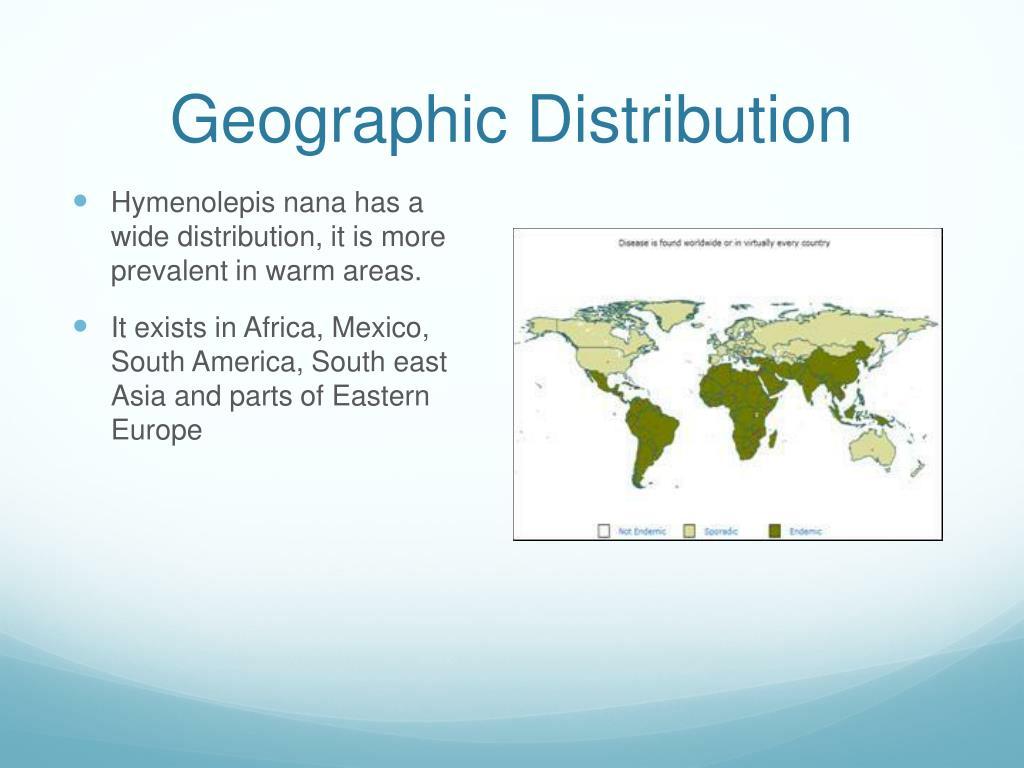 PPT - hymenolepis nana PowerPoint Presentation - ID:1323776