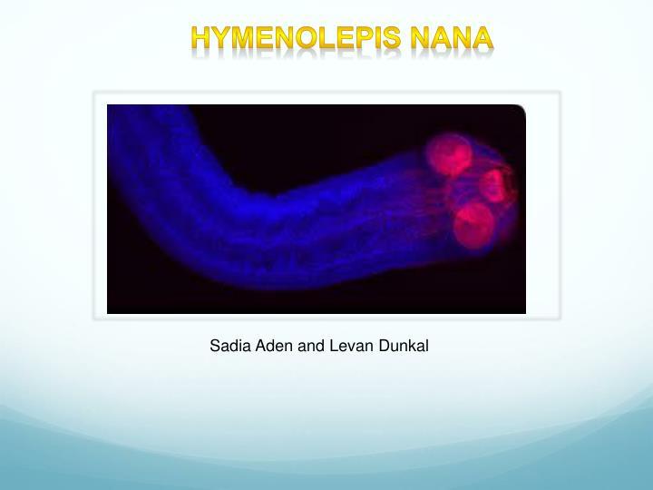 hymenolepis nana n.