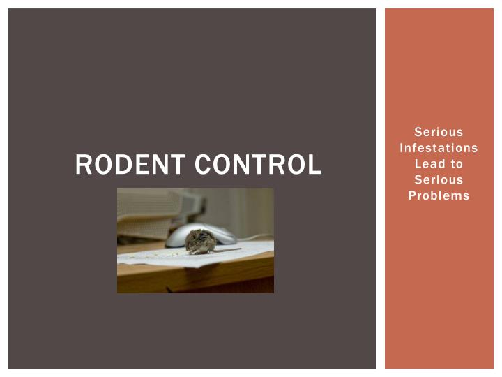 rodent control n.