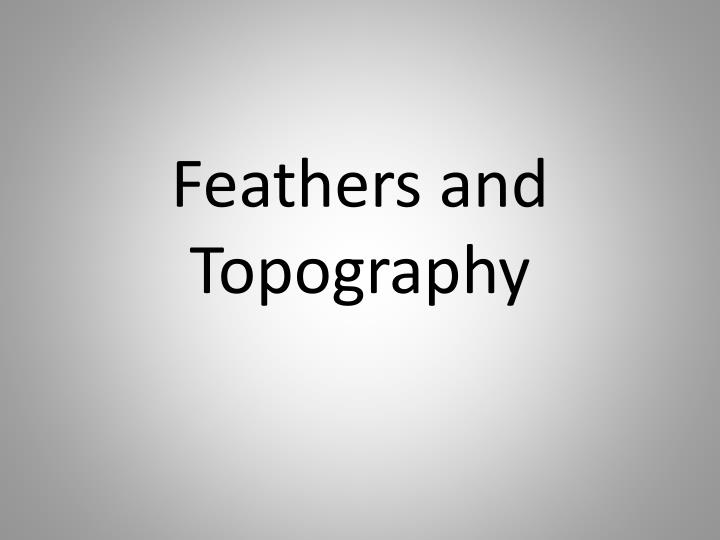 feathers and topography n.