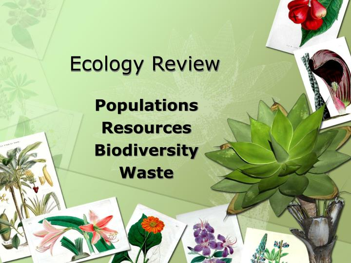 ecology review n.