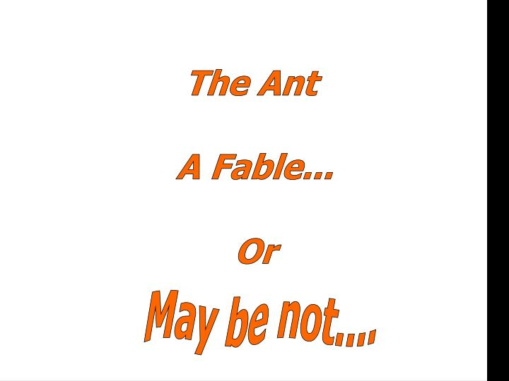 the ant n.