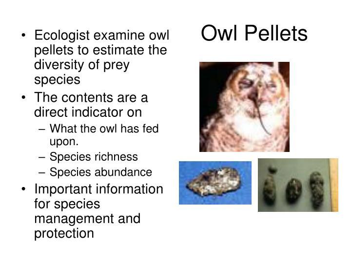 Ecologist examine owl pellets to estimate the diversity of prey species