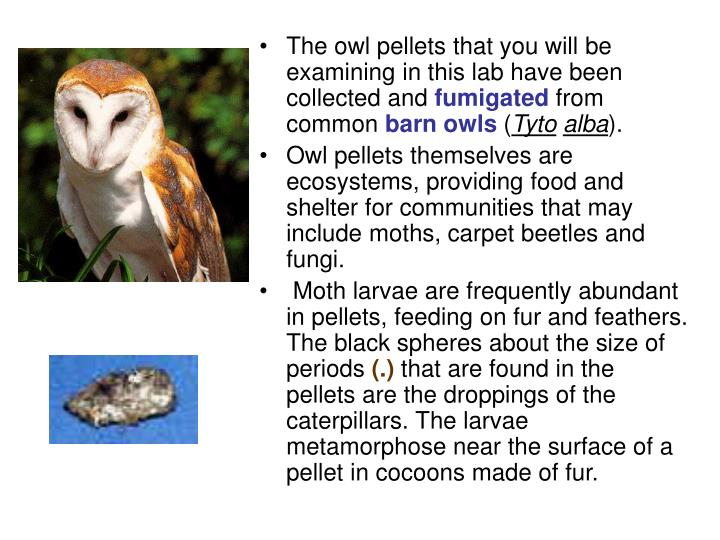 The owl pellets that you will be examining in this lab have been collected and