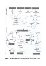 figure 3 voies du m tabolisme des glucides dans le rumen jouany 1995