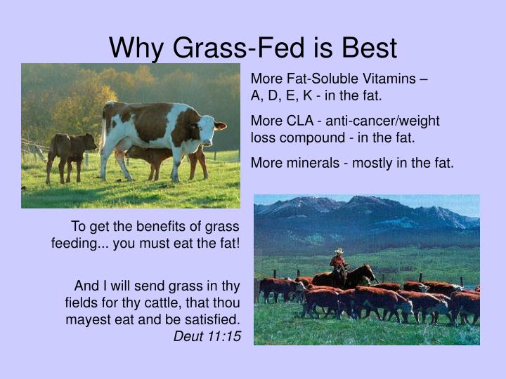 Why Grass-Fed is Best