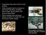 interesting zebra mussel attachments