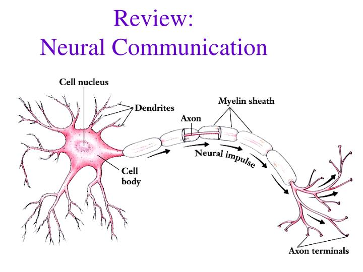 review neural communication n.