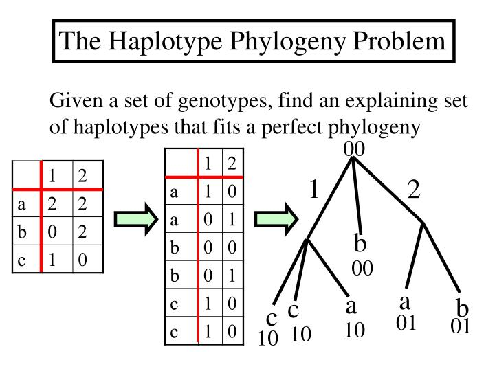 The Haplotype Phylogeny