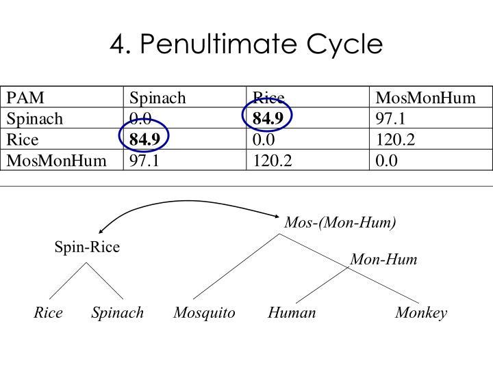 4. Penultimate Cycle