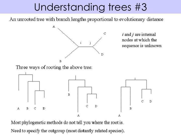 Understanding trees #3