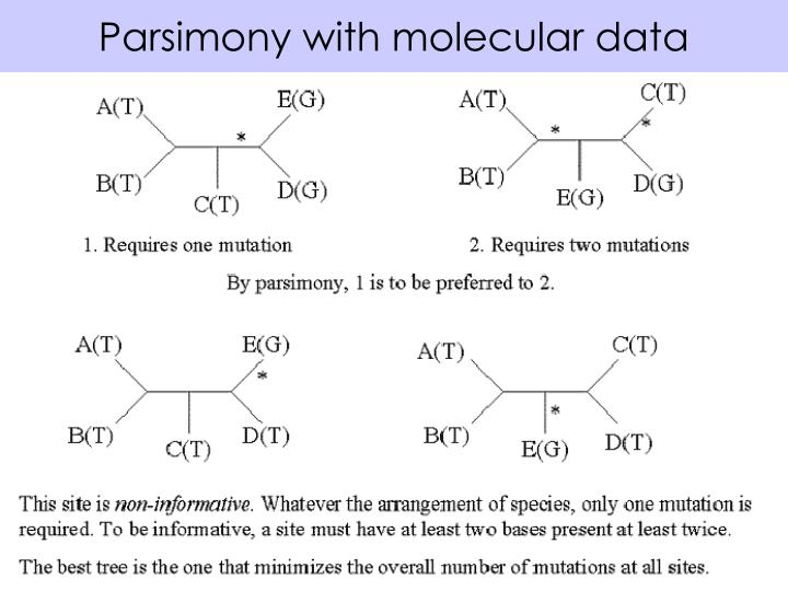 Parsimony with molecular data