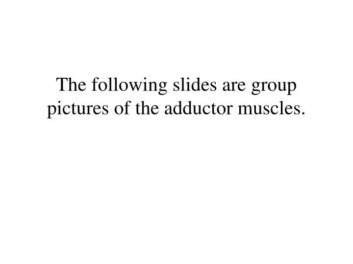 The following slides are group pictures of the adductor muscles.