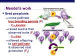 mendel s work