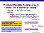 what did mendel s findings mean
