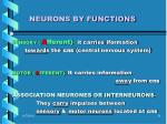 neurons by functions