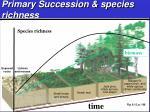 primary succession species richness