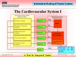 the cardiovascular system i