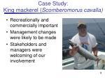 case study king mackerel scomberomorus cavalla