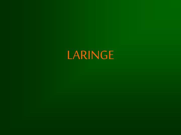 laringe n.