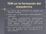 tem en la formaci n del mesoderma