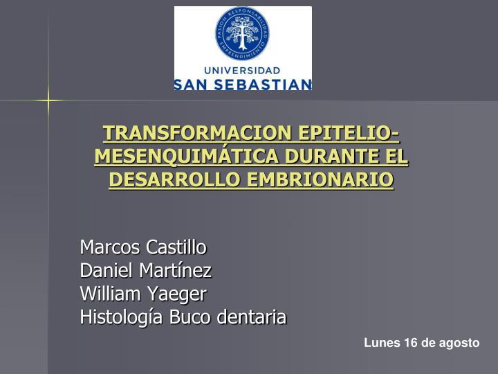 transformacion epitelio mesenquim tica durante el desarrollo embrionario n.