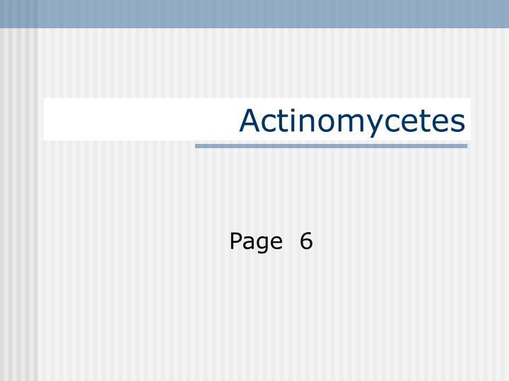 actinomycetes n.
