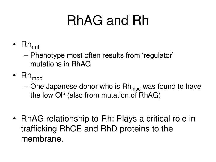RhAG and Rh