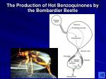 the production of hot benzoquinones by the bombardier beetle