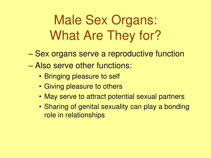 Male sex organs what are they for
